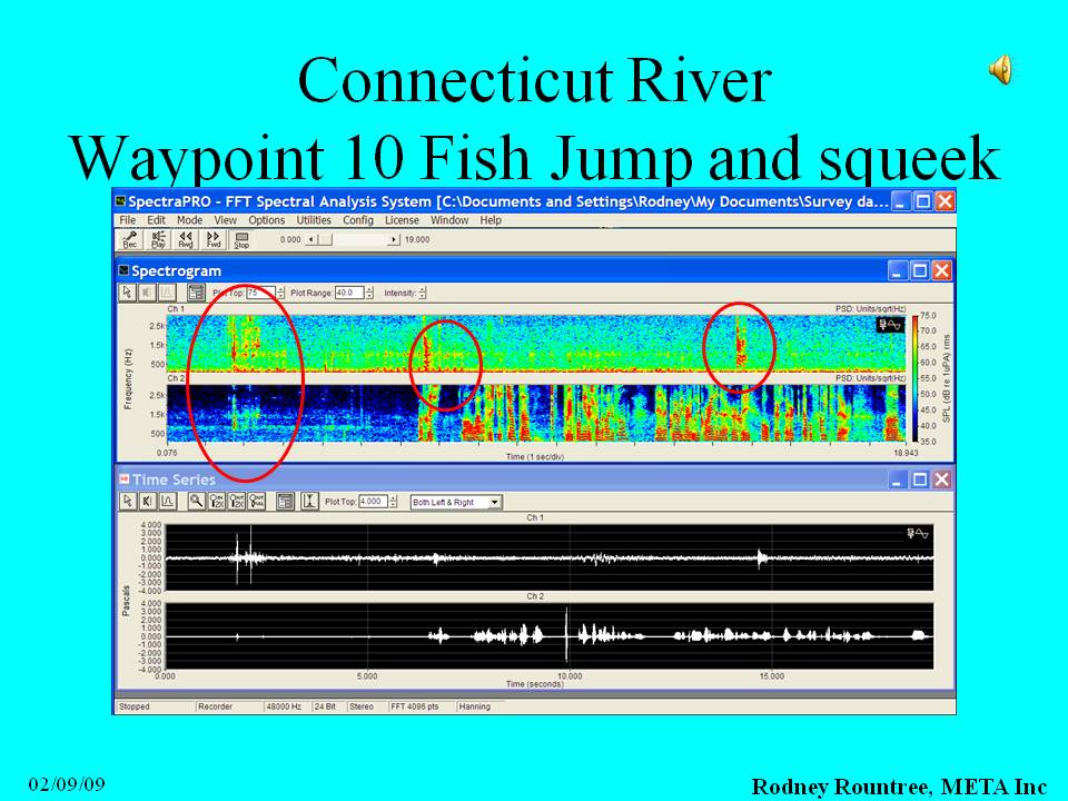 Slide showing the jump and squeak spectrogram
