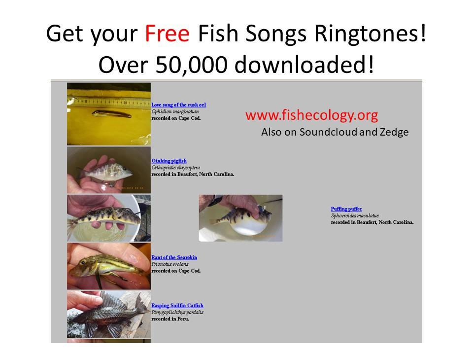 Studies of soniferous fishes (vocal behavior of fish)