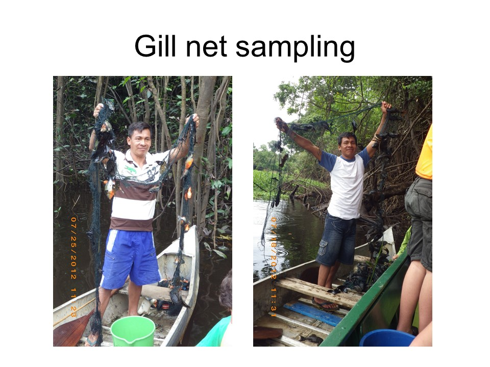 Alfredo with gill-net catches